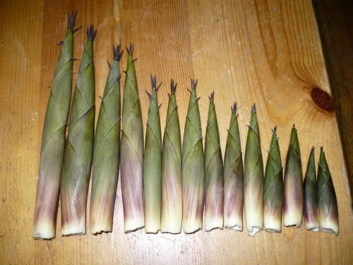 how to cook bamboo shoots chinese style