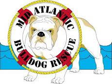MidAtlanitc Bulldog Rescue
