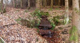 Quellen und Brunnen in der Pfalz