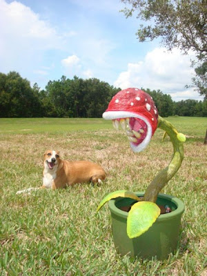 [Image: piranha-plant-1.jpg]