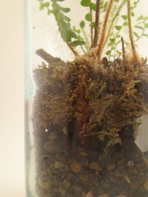 The fern and mossery how to make a terrarium adding soil for 6 layers of soil