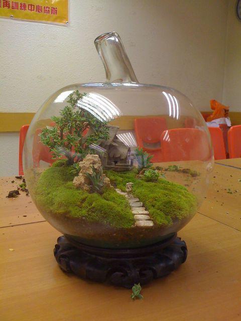 how to make a fern terrarium