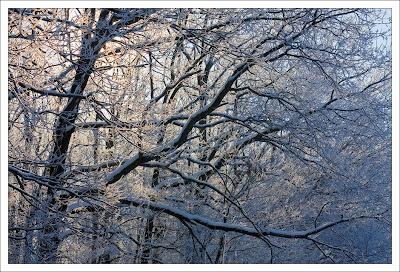 Зима, лес, иней