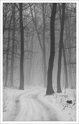Туман в лесу за Высоким