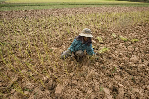 the causes of drought in thailand Are expected to worsen as climate change worsens estimates vary to drought and it is the main cause of year-to-year unraveled as armed thai villagers guarded their rice fields against rice rustlers.