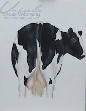 Koeienkont
