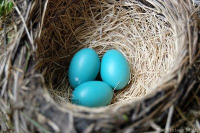 [robin's+nest]