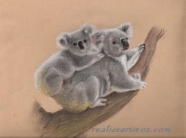 [aaaaa+koala+and+baby+blog.jpg]