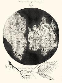 Observaciones microscópicas de Robert Hooke (1665)