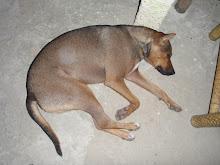 Lat hund fra Laos..