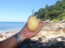 Peppe frister med en pære i Paradis..og jeg tok en bit!