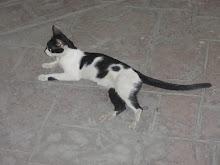 Egypt katt    , så lat og fin !