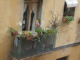 Más flores en tu ventana