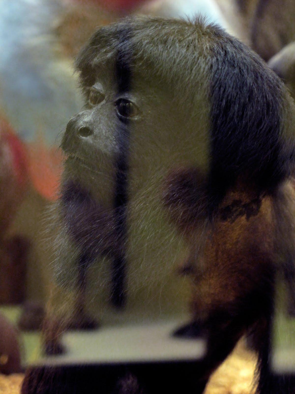 [Sincere+Monkey]