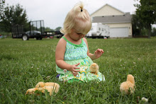 Summer with baby chicks