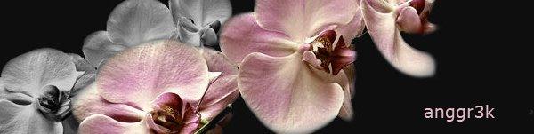 Orquideas de Coleccion