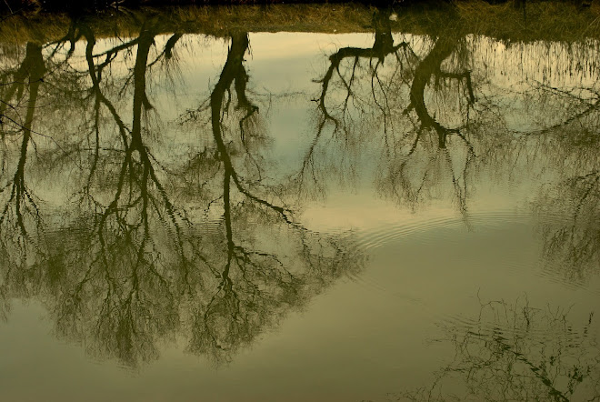 reflexii 2