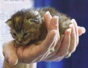 1. The Kitten Grenade