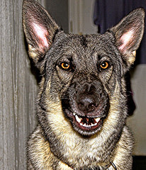 Nice doggie...