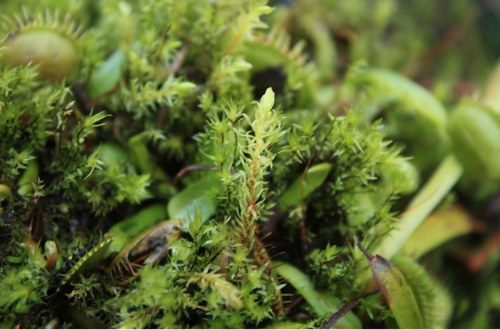 [moss-on-flytrap.jpg]