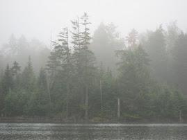 5 Ponds Wilderness