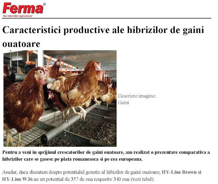 Caracteristici productive ale hibrizilor de găini ouătoare