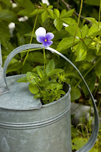 Plant i en vannkanne