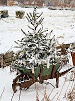 Juletre i trillebår