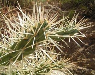 [cactus.htm]