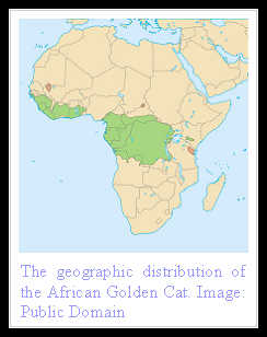 African Golden Cat Distribution