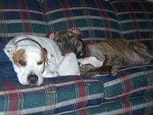 Sam & Lil Cuddling