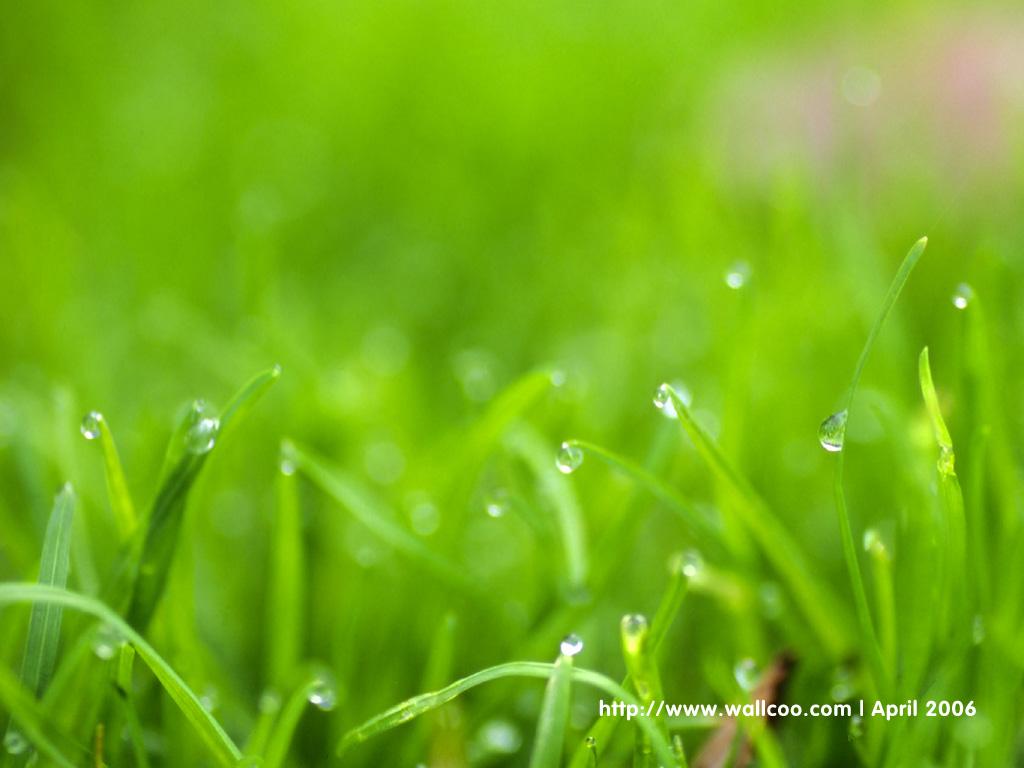 http://3.bp.blogspot.com/_9AXyy6JWmDA/TOJjugIU1mI/AAAAAAAAACw/rHcgMxSlkz8/s1600/4a86a9ea_1d6b194e_wallcoo.com_dewdrop_wallpaper_green_3.jpg
