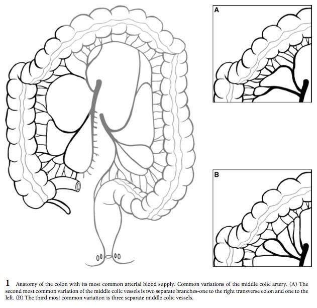 Left Paracolic Gutter Peritoneum Peritoneum Peritoneal