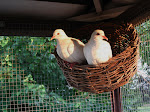Our Doves