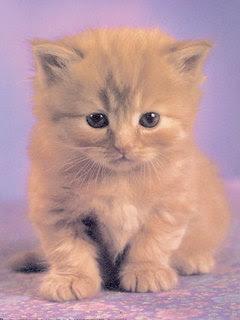 Slatka mačkica download besplatne pozadine slike za mobitele