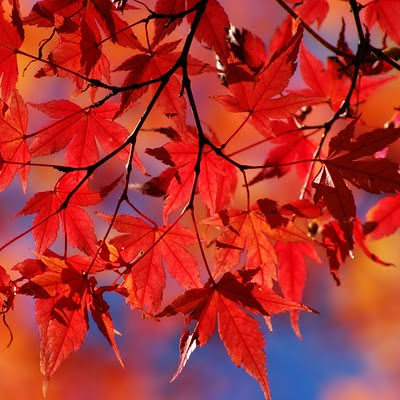 Autumn red leaves download free wallpapers for Apple iPad