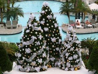 Tropski Božić download besplatne pozadine slike za mobitele