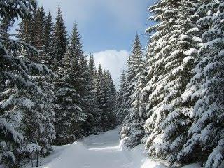 Snijeg, borovi, zima download besplatne pozadine slike za mobitele