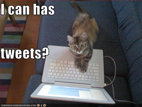 funny cat picture - funny cat pictures-lolcat-i-can-has-tweets