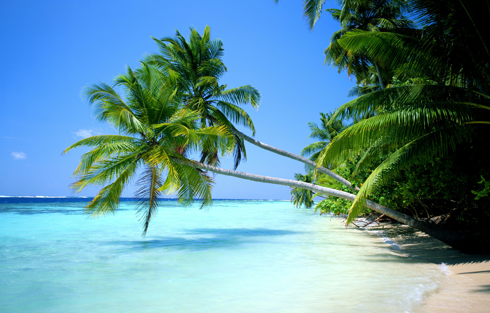 ... fondo hd palmeras playa wallpaper wallpaper fondo hd fondo de pantalla