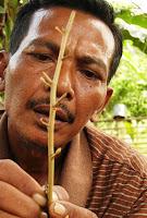 ICRAF-NOEL Aceh Jaya: Merintis Pembibitan Mandiri di Aceh