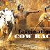 Budaya Pacu Jawi ditengah Genangan Lumpur Cow Race Event