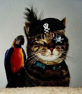 cat pirate gif
