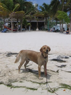 Scout on the beach at Isla Mujeres