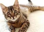 Gatos Que Buscan Hogar