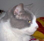 Sir Tivoli de Cintra - Adoptado pela Sara!