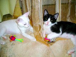 O Tico e a Nico - Adptados pela Vanda e Pedro!