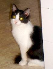 Robin - Adoptado pela mamã do Rodolfo.