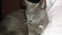 Ashley Blue - Adoptada pela Tânia!!! (Fevereiro 2009)