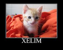 Xelim - Adptado pela Sónia e Rafael! (Junho 2009)